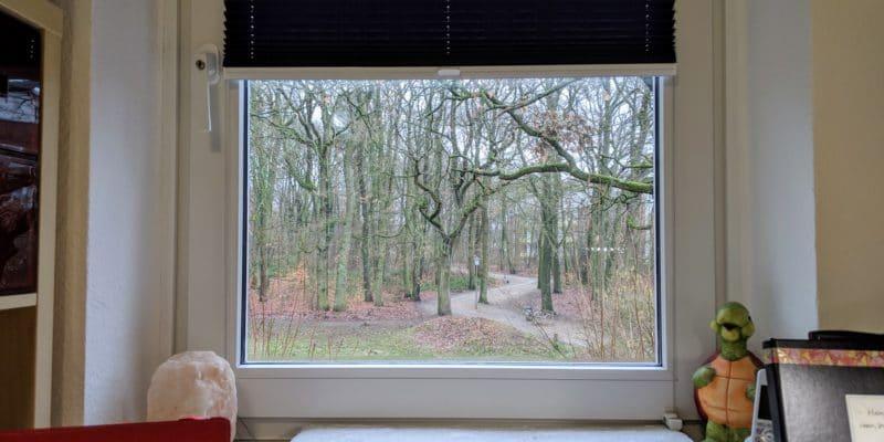 Blick aus meinem Fenster, im Hintergrund sieht man einen Park und viele Bäume